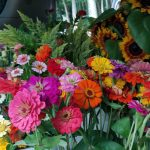 Zinnians, Sunflowers & Celosia